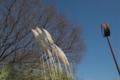 [水元公園]風の影響をモロに受けてたなびく