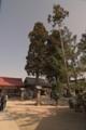 [八重垣神社]巨木