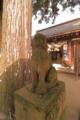 [八重垣神社]狛犬