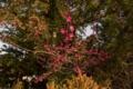 [八重垣神社]赤い梅