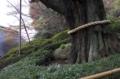 [行ったとこ][椿山荘]周囲20m