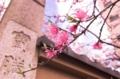 [桜][南蔵院][板橋]