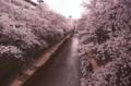 [石神井川][桜][板橋]