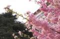 [大岡山][東工大][桜]