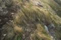 [入道崎]常に吹く風で倒れこむ草