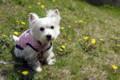 タンポポも咲いてましたよ。日なたは暖かくて気持ち良かったです。