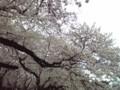 小金井公園なう