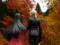 題名『令嬢と騎士 カットNo.003』
