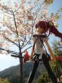 [フィギュア][トイズワークス][灼眼のシャナ][桜][*Season01:春]トイズワークス 『灼眼のシャナS』 シャナ セレモニーVer. カットNo.002
