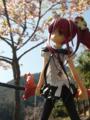 [フィギュア][トイズワークス][灼眼のシャナ][桜][*Season01:春]トイズワークス 『灼眼のシャナS』 シャナ セレモニーVer. カットNo.001