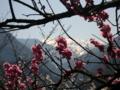 [風景・景観][桃][桜]遠方に赤石岳を望む