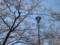 桜 カットNo.004 (長野県下伊那郡大鹿村)