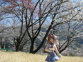 [フィギュア][コトブキヤ][D.C. ~ダ・カーポ~][桜][*Season01:春]朝倉音姫 カットNo.003