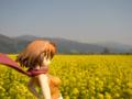 [フィギュア][コトブキヤ][舞-HiME][花][*Season01:春]舞-HiME 鴇羽舞衣 カットNo.028