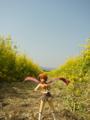 [フィギュア][コトブキヤ][舞-HiME][花][*Season01:春]舞-HiME 鴇羽舞衣 カットNo.026