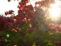 [フィギュア][ALTER][ゼロの使い魔][花][ツツジ][*Season01:春]ルイズ ゴスパンクVer. カットNo.023