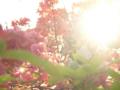 [フィギュア][ALTER][ゼロの使い魔][*Season01:春]ルイズ ゴスパンクVer. カットNo.022(mis-take)