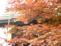 [風景・景観][神社・仏閣]長野市・善光寺ご開帳 カットNo.016