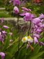 [風景・景観][神社・仏閣][花]長野市・善光寺にて。花の種類が分からない…orz