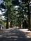 長野県松本市あがたの森公園 カットNo.001