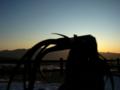 [フィギュア][GoodSmileCompany][BRS][*Season04:冬]グッドスマイルカンパニー ブラック★ロックシューター カットNo.0007