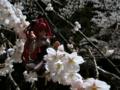 [フィギュア][オーキッドシード][神曲奏界ポリフォニカ][*Season01:春]コーティカルテ・アパ・ラグランジェス カットNo.011
