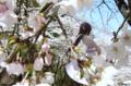 [フィギュア][メガハウス][ガンダム][機動新世紀ガンダムX][*Season01:春]メガハウス エクセレントモデル RAHDX ティファ・アディール カットNo.013