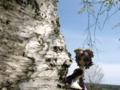 [フィギュア][トイズワークス][スーパーロボット大戦][*Season01:春]トイズワークス ラトゥーニ・スゥボータ カットNo.027