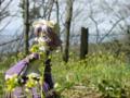[フィギュア][トイズワークス][スーパーロボット大戦][*Season01:春]トイズワークス ラトゥーニ・スゥボータ カットNo.016
