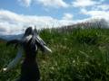 [フィギュア][コトブキヤ][TYPE-MOON][空の境界][*Season01:春]コトブキヤ 空の境界 黒桐鮮花 カットNo.023