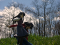 [フィギュア][コトブキヤ][TYPE-MOON][空の境界][*Season01:春]コトブキヤ 空の境界 黒桐鮮花 カットNo.021