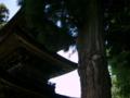 [風景・景観][建築][史跡・名勝][神社・仏閣]国宝・大法寺三重塔(長野県小県郡青木村)