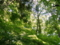 [風景・景観][森林]