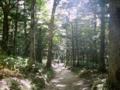 [風景・景観][森林]上高地