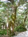 [風景・景観][森林][森林]