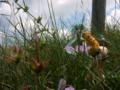 [フィギュア][ソリッドシアター][塵骸魔京][*Season02:夏]風のうしろを歩むもの カットNo.007