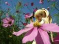 [フィギュア][メガハウス][リトルバスターズ!][*Season03:秋]メガハウス リトルバスターズ!EX 朱鷺戸沙耶 カットNo.030