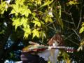 [フィギュア][ムービック][コトブキヤ][けいおん!][*Season03:秋]ムービック/コトブキヤ 平沢唯 カットNo.041