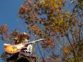 [フィギュア][ムービック][コトブキヤ][けいおん!][*Season03:秋]ムービック/コトブキヤ 平沢唯 カットNo.040