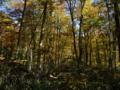 [風景・景観][紅葉][森林]長野市・奥裾花自然園より