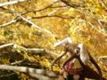 [フィギュア][ソリッドシアター][*Season03:秋]ソリッドシアター ぽんわりDays ピズ カットNo.006