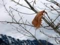 [風景・景観][雪][山]戸隠高原・鏡池にて