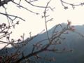 [風景・景観][花][梅]JR飯田線・伊那小沢駅にて