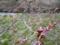 高遠城址公園(長野県伊那市)