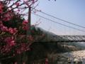 [風景・景観][空][河川]天白公園の桃介橋(長野県木曽郡南木曽町)
