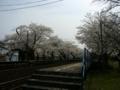 [風景・景観][鉄道][桜]のと鉄道七尾線・能登鹿島駅(石川県鳳珠郡穴水町)