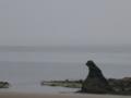 [風景・景観][海]国道249号線よりゴジラ岩(石川県珠洲市)