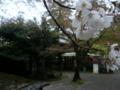 [風景・景観][史跡・名勝][桜]兼六園(石川県・金沢市)