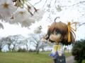 [フィギュア][*Season01:春][GoodSmileCompany][ねんどろいど][D.C. ~ダ・カーポ~]ねんどろいど 朝倉音夢 カットNo.017