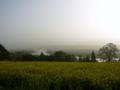 [風景・景観][花][河川]菜の花公園から(長野県飯山市)